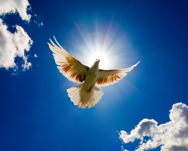 dove-bird-for-world-peace-1280x1024